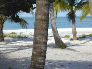 Beach Vacations – Perfect for Families and Pets