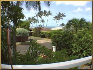 Hawaii Oahu Pet Friendly Rentals