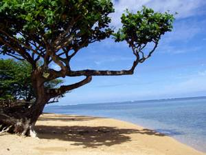 Poipu Beach, Hawaii - The Hawaiian Island Place for Family Adventure