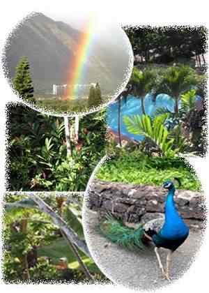 Hawaii Oahu Golf Vacation Rentals