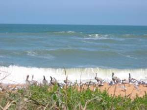 St Augustine Beach, Florida Vacation Rental Deals